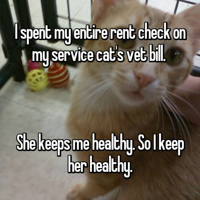 I spent my entire rent check on my service cat's vet bill.     She keeps me healthy. So I keep her healthy.