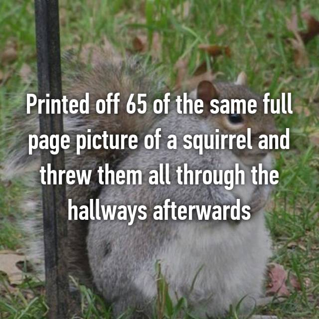 Printed off 65 of the same full page picture of a squirrel and threw them all through the hallways afterwards