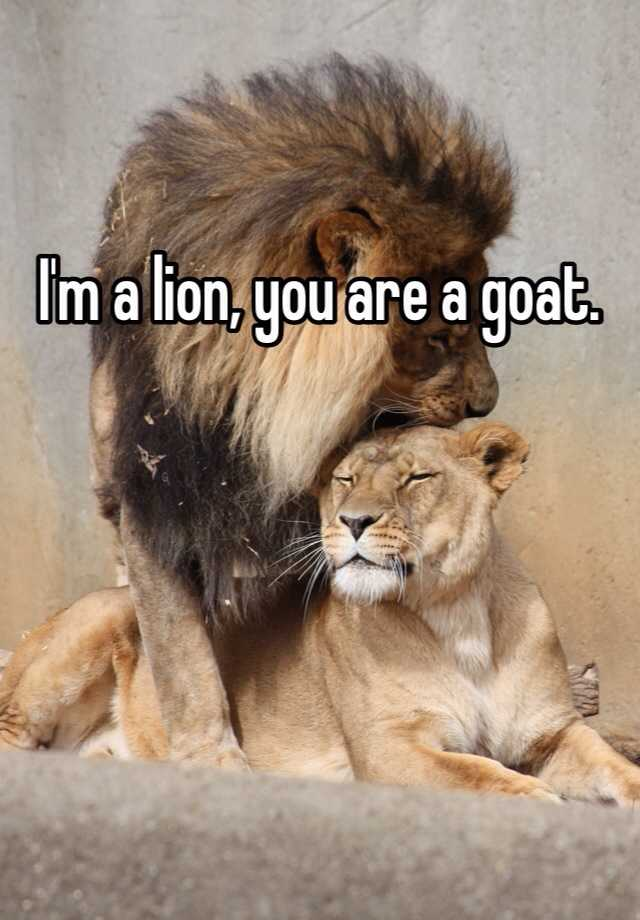 Lioness and lion