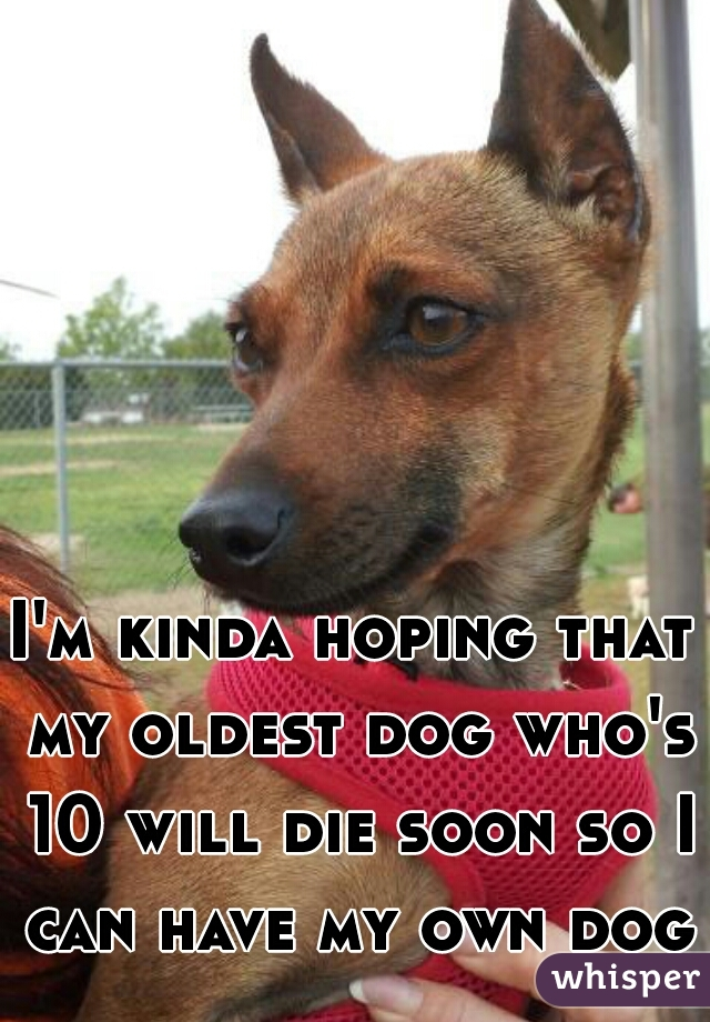I'm kinda hoping that my oldest dog who's 10 will die soon so I can have my own dog
