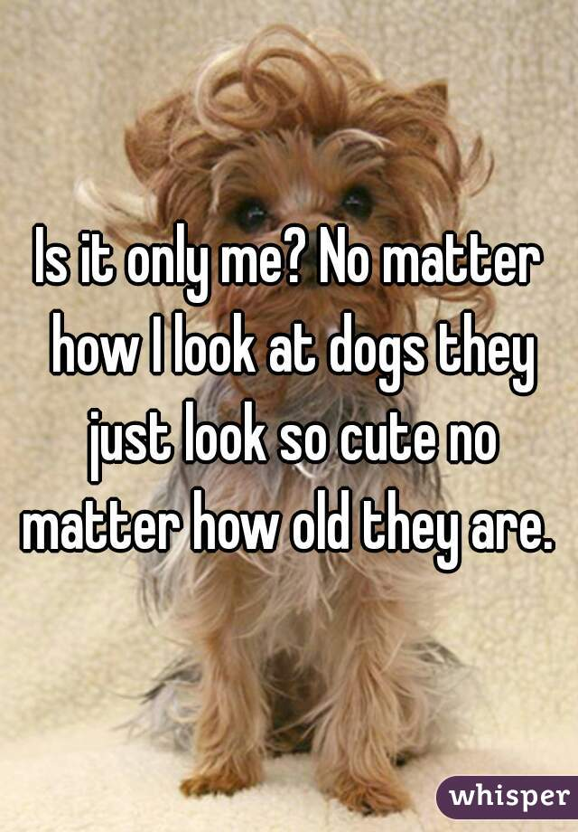 Is it only me? No matter how I look at dogs they just look so cute no matter how old they are.
