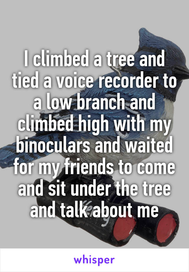 I climbed a tree and tied a voice recorder to a low branch and climbed high with my binoculars and waited for my friends to come and sit under the tree and talk about me
