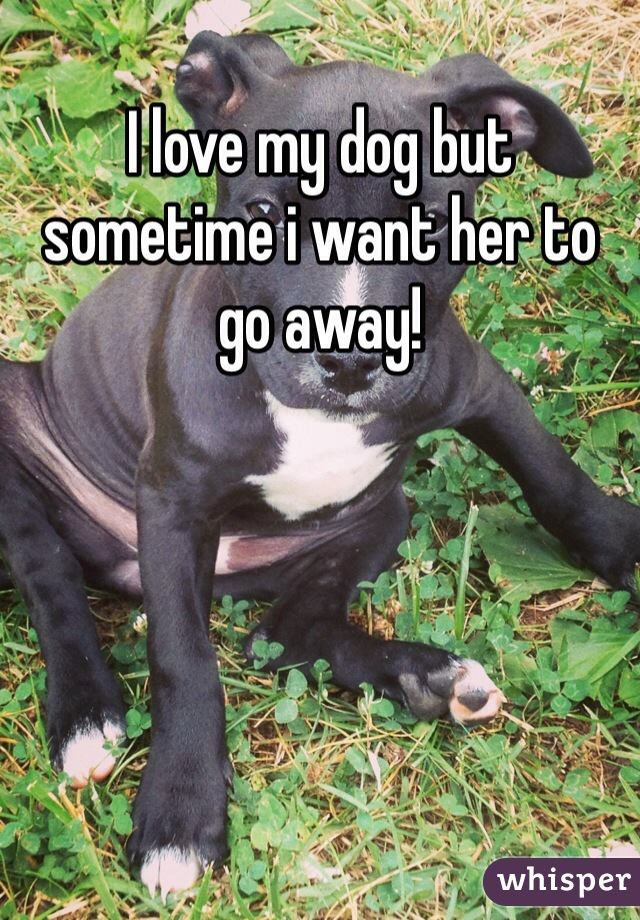I love my dog but sometime i want her to go away!