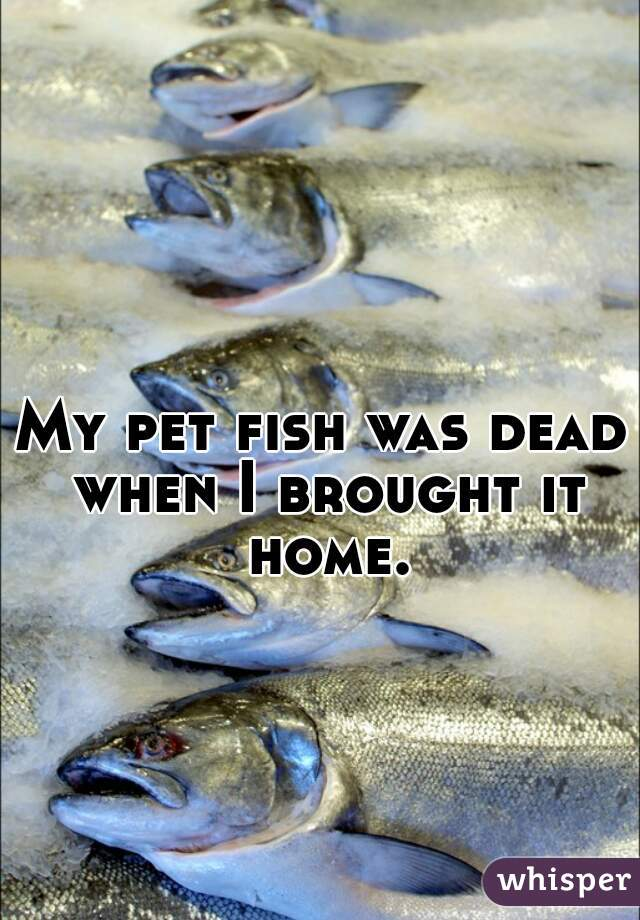 My pet fish was dead when I brought it home.