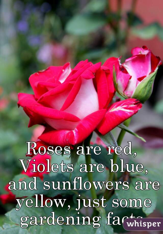 Roses are red, Violets are blue, and sunflowers are yellow, just some gardening facts.
