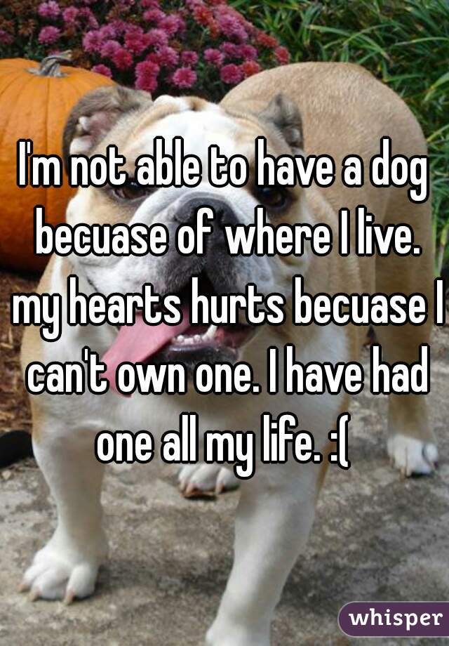I'm not able to have a dog becuase of where I live. my hearts hurts becuase I can't own one. I have had one all my life. :(