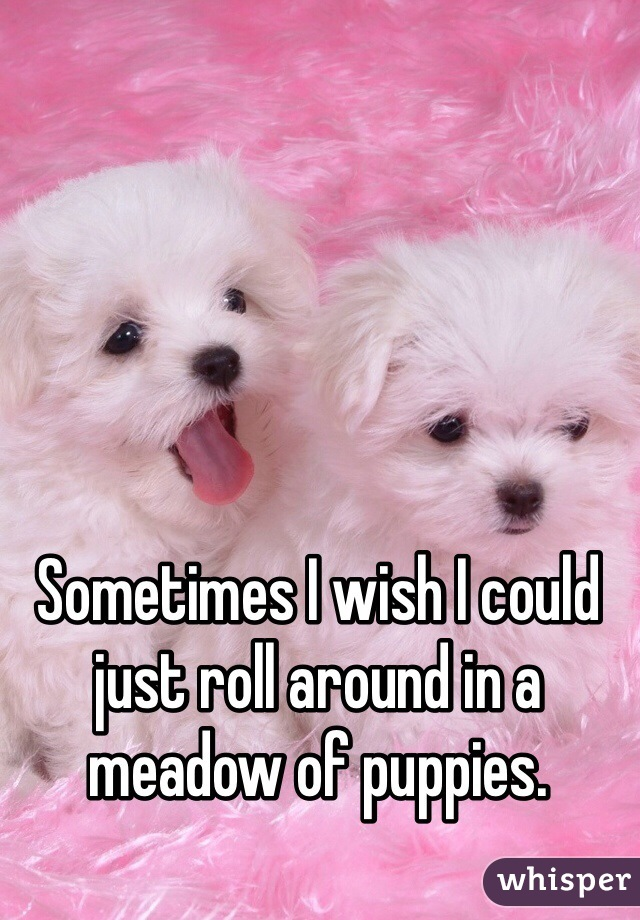 Sometimes I wish I could just roll around in a meadow of puppies.