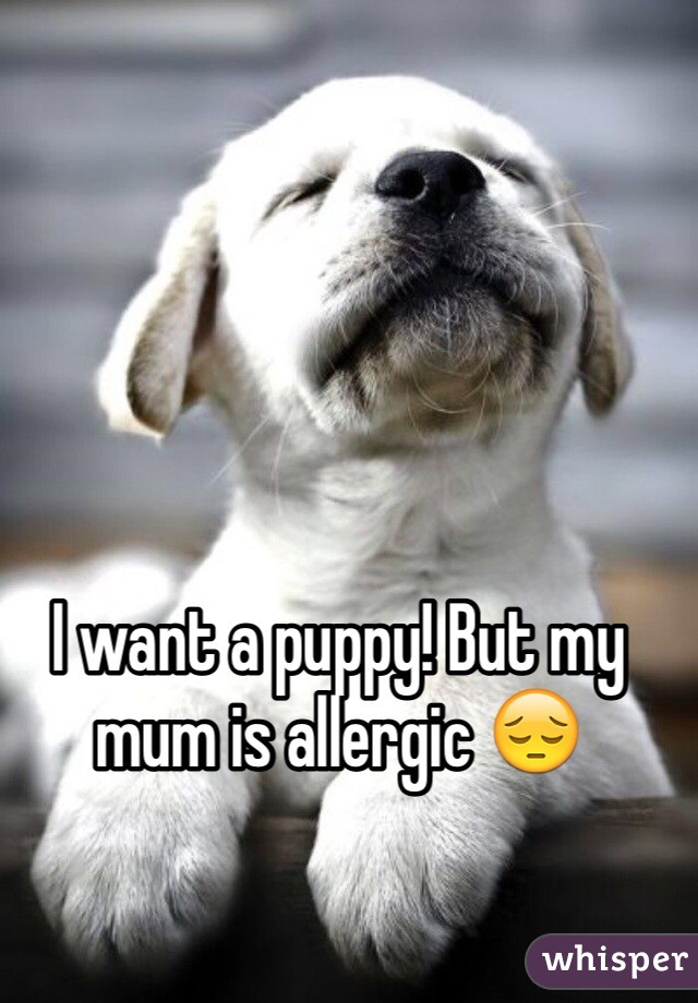 I want a puppy! But my mum is allergic 😔