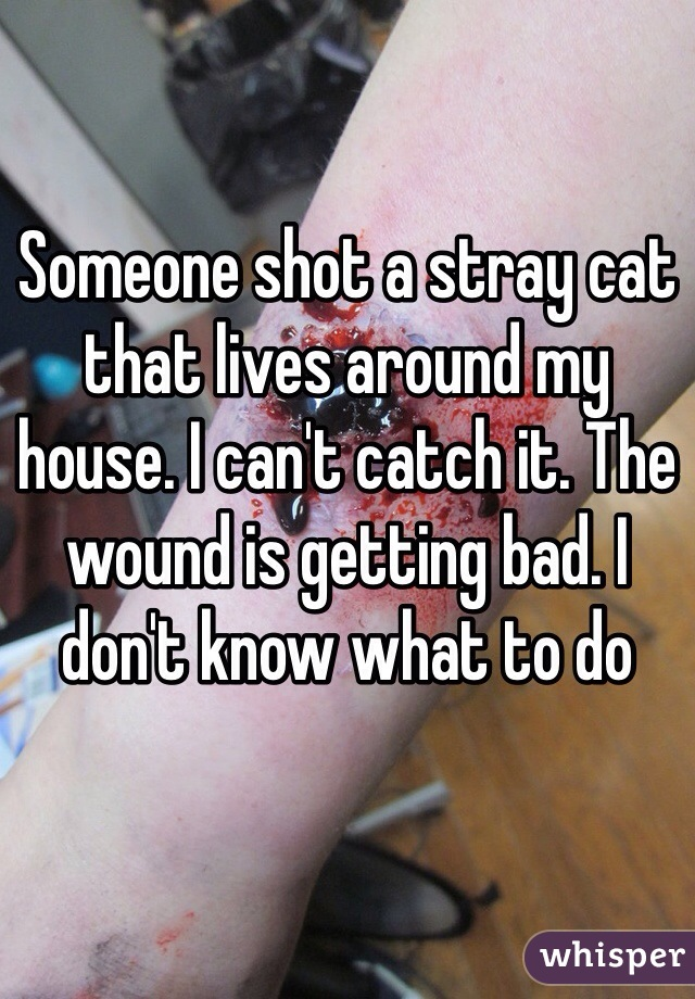 Someone shot a stray cat that lives around my house. I can't catch it. The wound is getting bad. I don't know what to do
