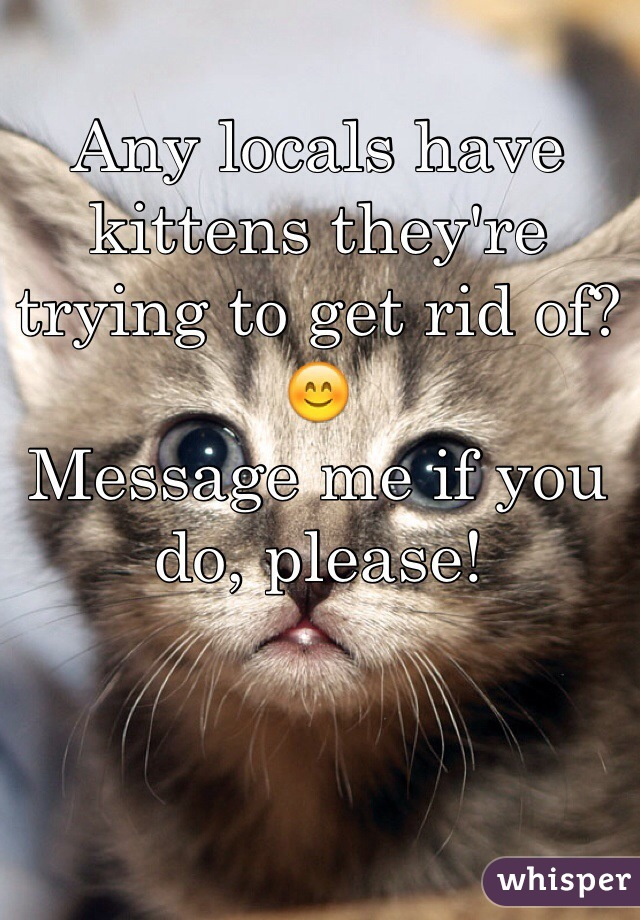 Any locals have kittens they're trying to get rid of? 😊 Message me if you do, please!