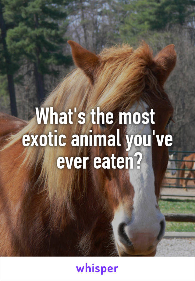 What's the most  exotic animal you've  ever eaten?