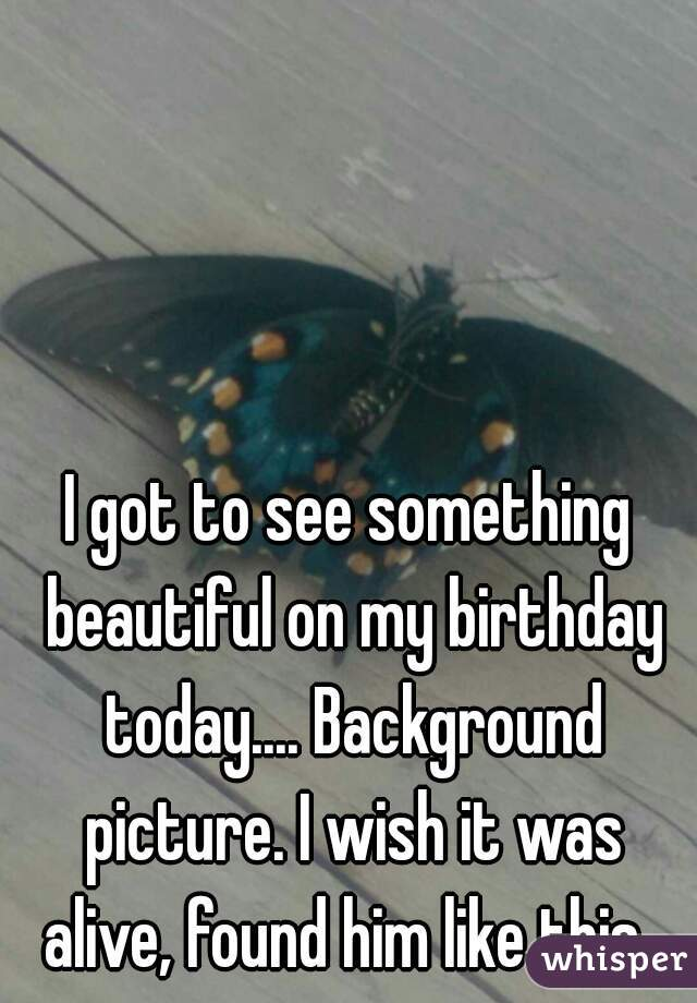 I got to see something beautiful on my birthday today.... Background picture. I wish it was alive, found him like this.