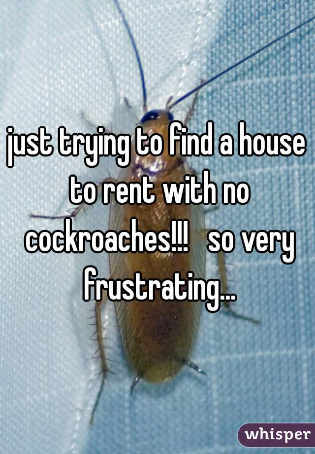 just trying to find a house to rent with no cockroaches!!!   so very frustrating...