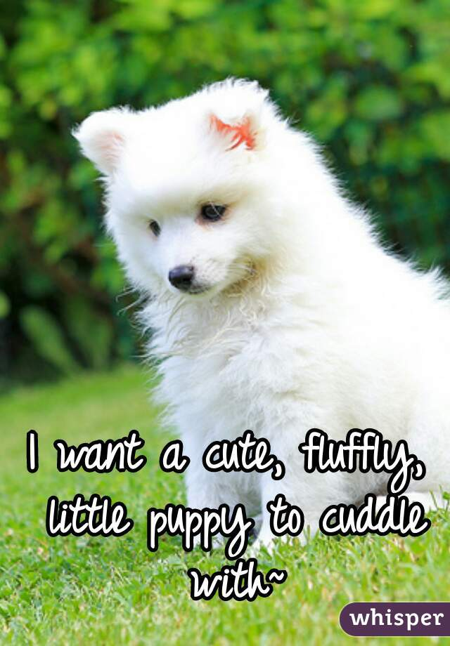 I want a cute, fluffly, little puppy to cuddle with~