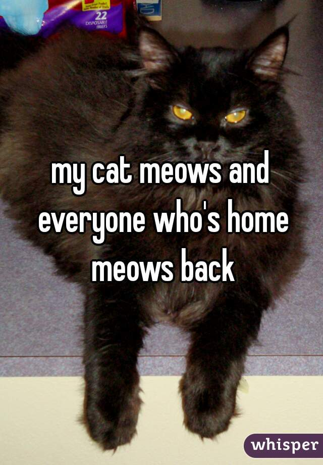 my cat meows and everyone who's home meows back