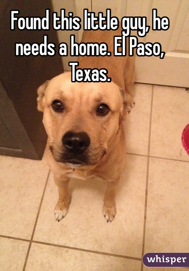 Found this little guy, he needs a home. El Paso, Texas.