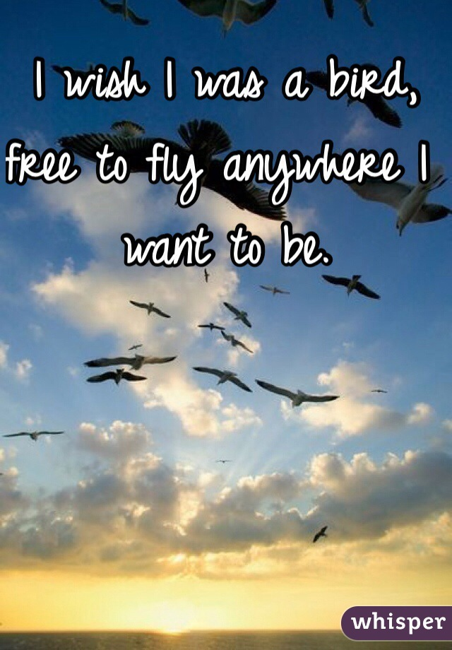 I wish I was a bird, free to fly anywhere I want to be.