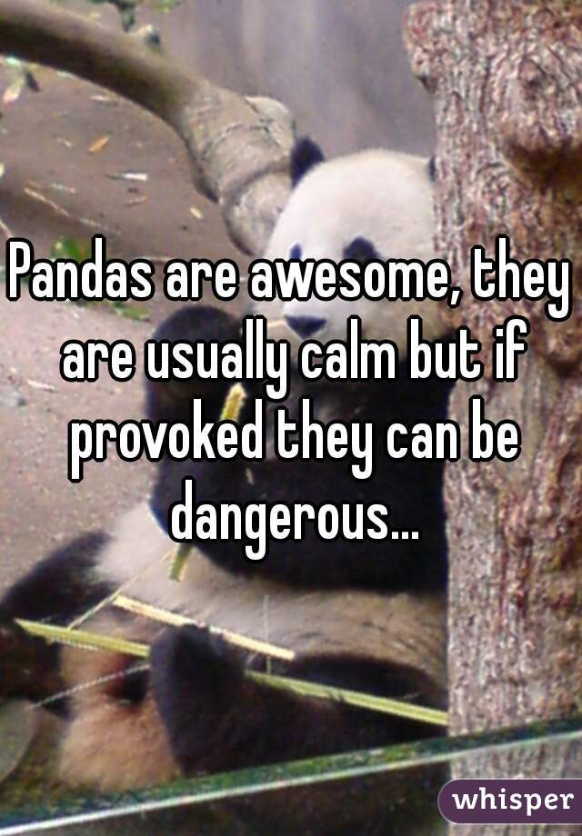 Pandas are awesome, they are usually calm but if provoked they can be dangerous...
