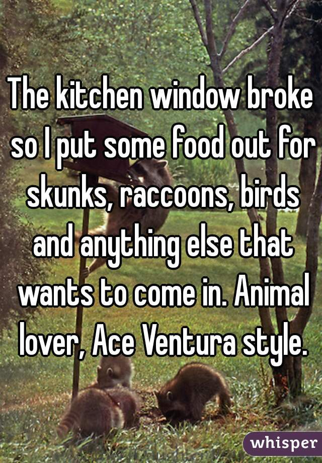 The kitchen window broke so I put some food out for skunks, raccoons, birds and anything else that wants to come in. Animal lover, Ace Ventura style.