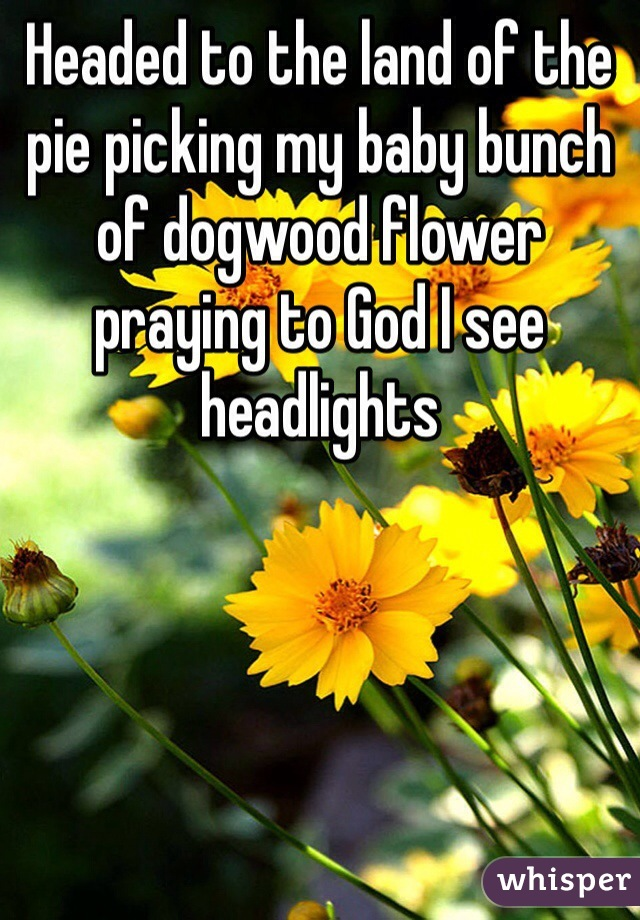 Headed to the land of the pie picking my baby bunch of dogwood flower praying to God I see headlights