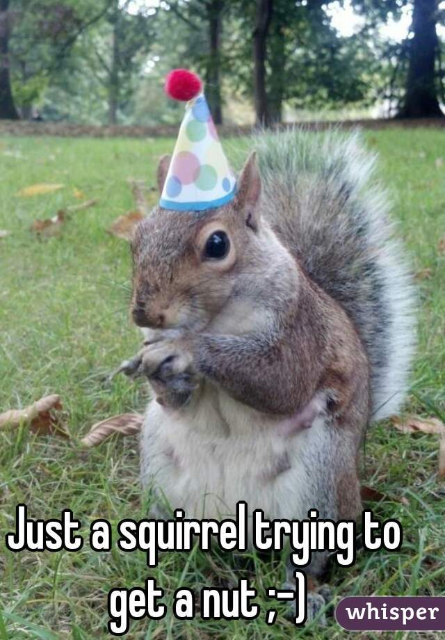 Just a squirrel trying to get a nut ;-)