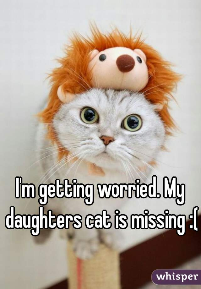 I'm getting worried. My daughters cat is missing :(