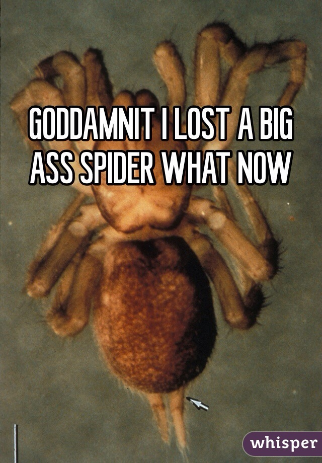 GODDAMNIT I LOST A BIG ASS SPIDER WHAT NOW