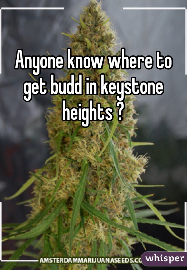 Anyone know where to get budd in keystone heights ?