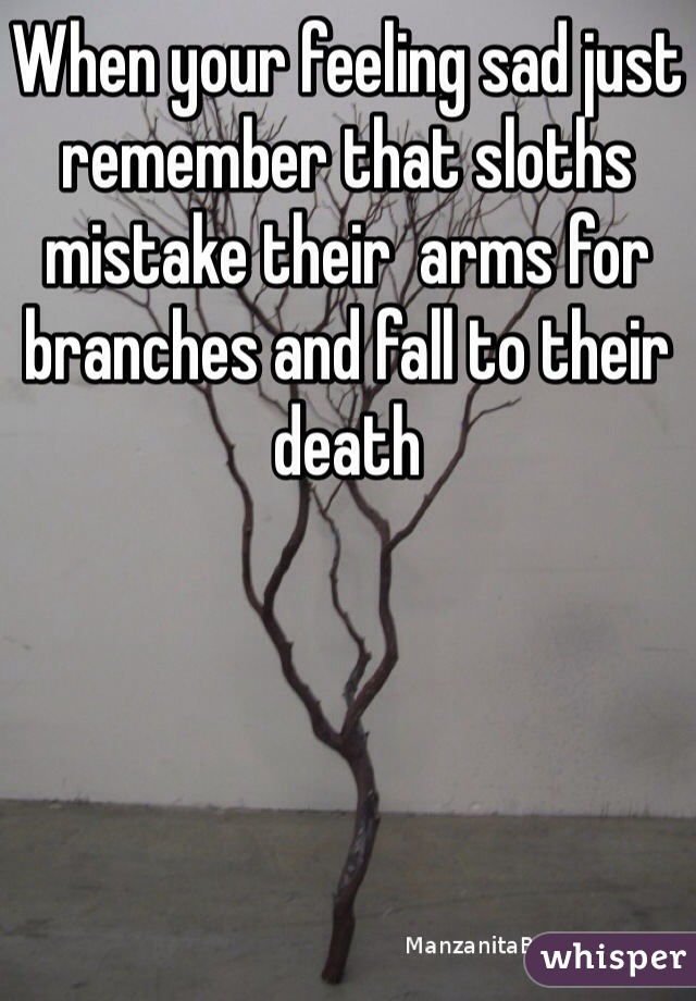 When your feeling sad just remember that sloths mistake their  arms for branches and fall to their death