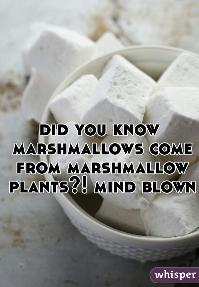 did you know marshmallows come from marshmallow plants?! mind blown.