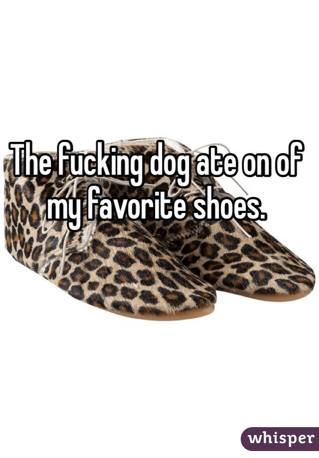 The fucking dog ate on of my favorite shoes.