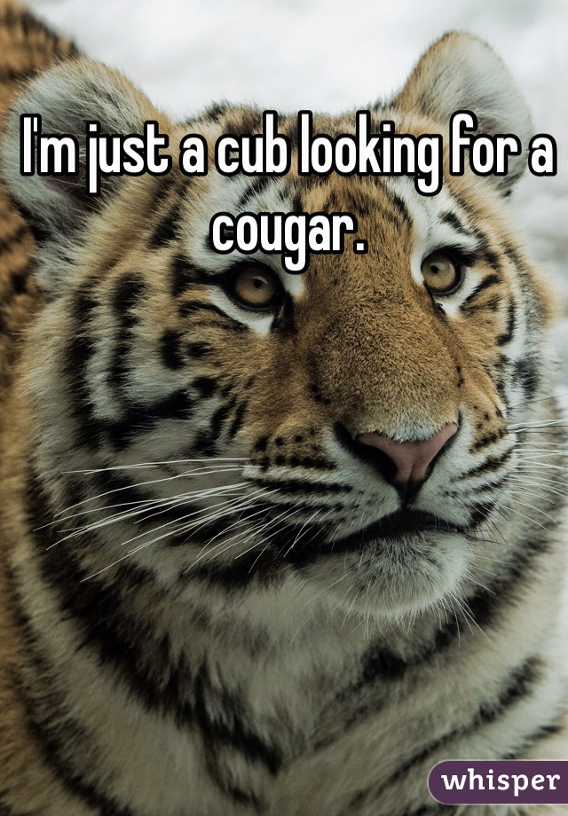 I'm just a cub looking for a cougar.