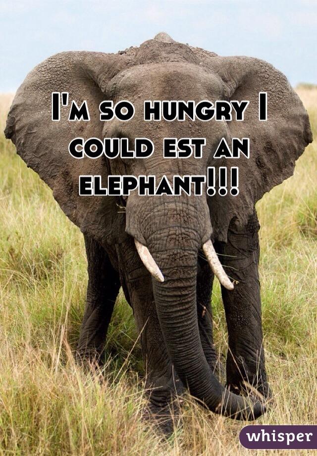 I'm so hungry I could est an elephant!!!