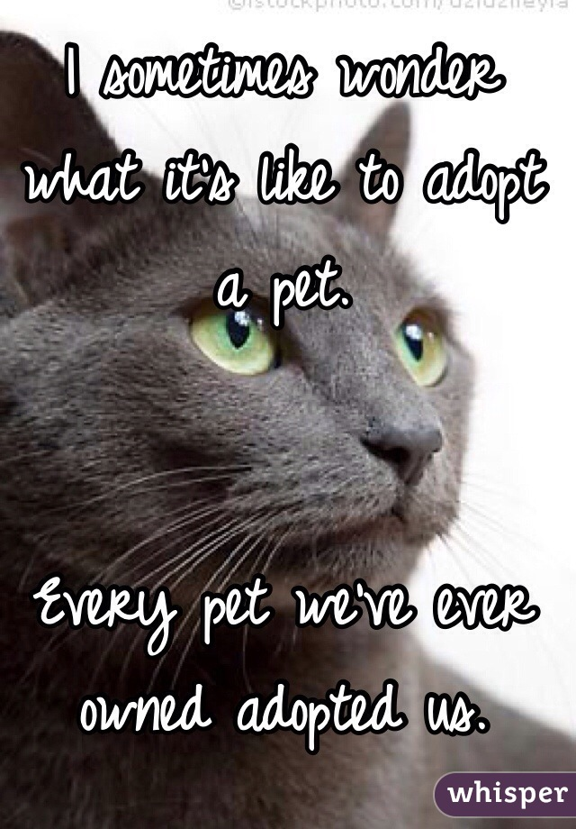 I sometimes wonder what it's like to adopt a pet.    Every pet we've ever owned adopted us.