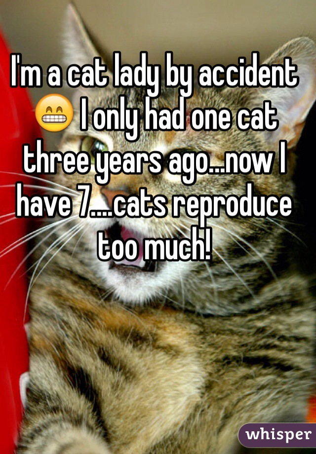 I'm a cat lady by accident 😁 I only had one cat three years ago...now I have 7....cats reproduce too much!