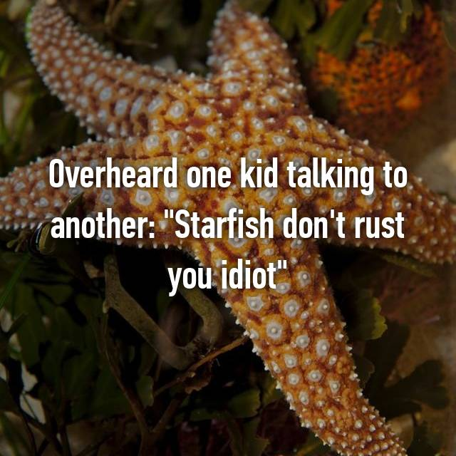 "Overheard one kid talking to another: ""Starfish don't rust you idiot"""