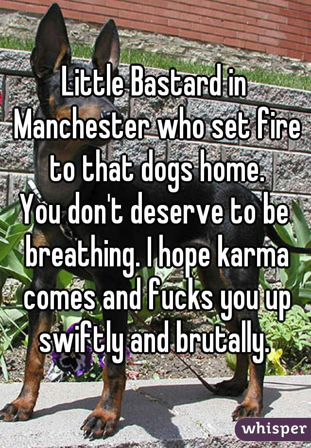 Little Bastard in Manchester who set fire to that dogs home. You don't deserve to be breathing. I hope karma comes and fucks you up swiftly and brutally.