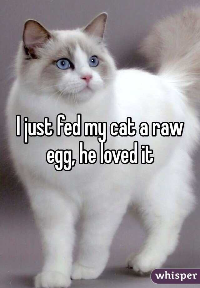 I just fed my cat a raw egg, he loved it