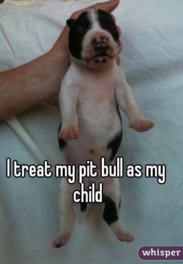 I treat my pit bull as my child