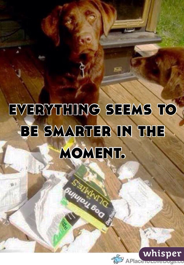 everything seems to be smarter in the moment.