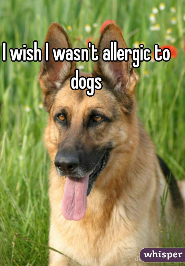 I wish I wasn't allergic to dogs