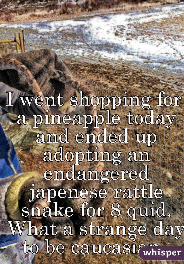 I went shopping for a pineapple today and ended up adopting an endangered japenese rattle snake for 8 quid. What a strange day to be caucasian.