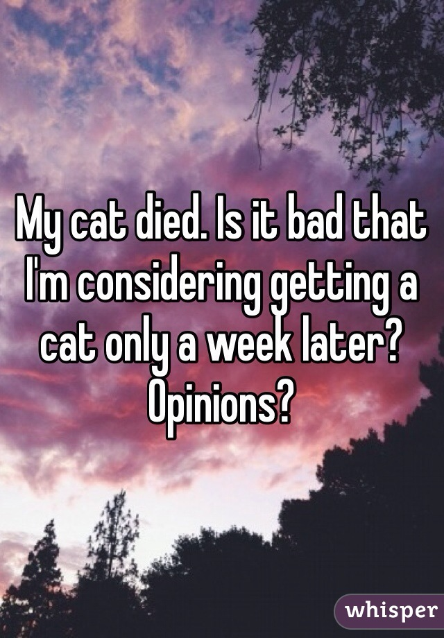 My cat died. Is it bad that I'm considering getting a cat only a week later? Opinions?
