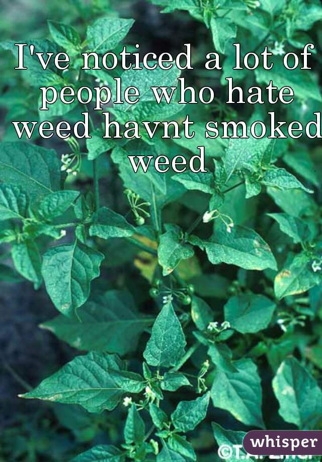 I've noticed a lot of people who hate weed havnt smoked weed