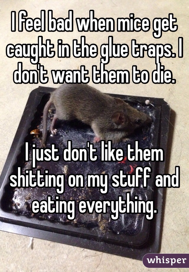 I feel bad when mice get caught in the glue traps. I don't want them to die.    I just don't like them shitting on my stuff and eating everything.