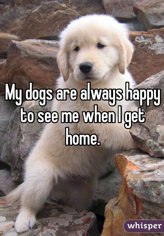My dogs are always happy to see me when I get home.