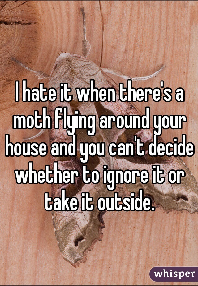 I hate it when there's a moth flying around your house and you can't decide whether to ignore it or take it outside.