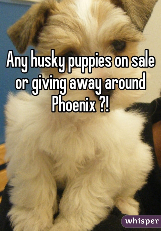 Any husky puppies on sale or giving away around Phoenix ?!