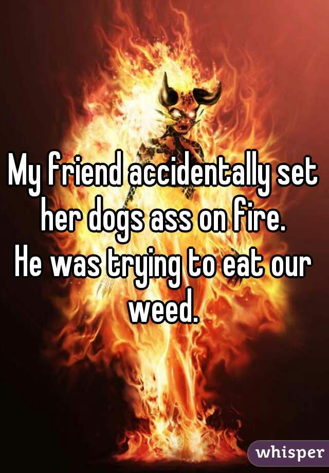 My friend accidentally set her dogs ass on fire.   He was trying to eat our weed.