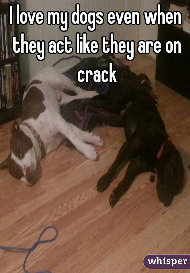 I love my dogs even when they act like they are on crack